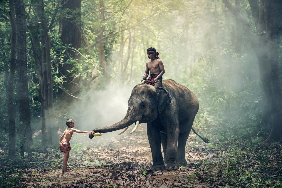 elephant-1822481_960_720